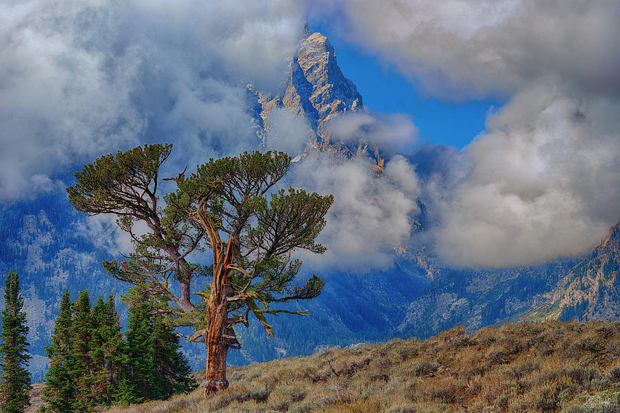 Clouds begin to break in front of the Tetons at Patriarch Tree