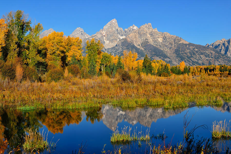 Teton reflections with peak autumn foliage at Schwabacher Landing in Grand Teton National Park