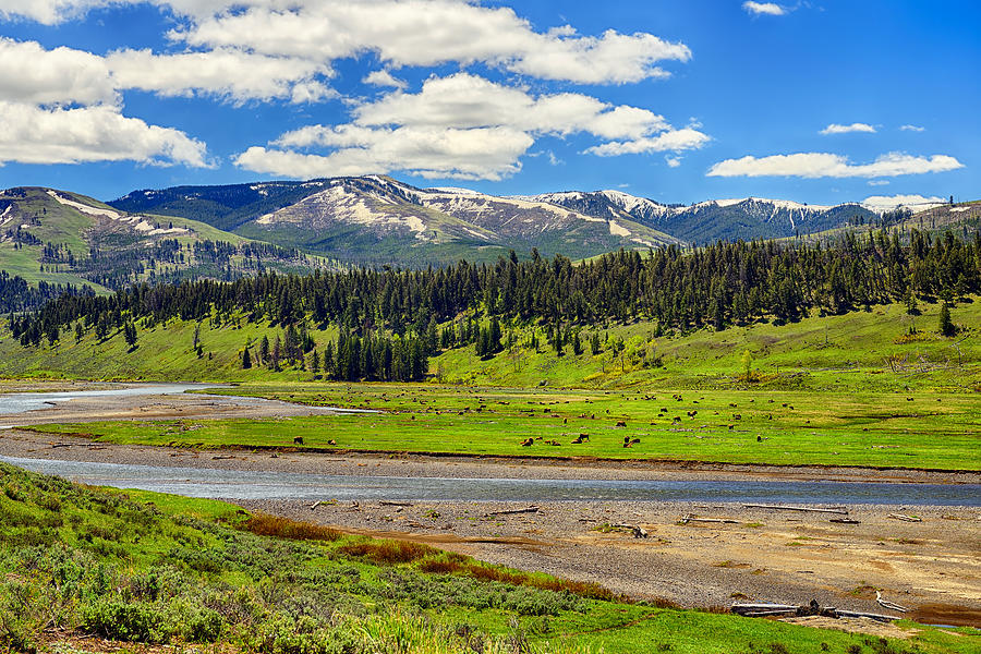 Yellowstone Lamar Valley fine art nature prints