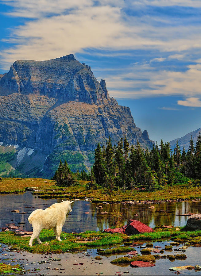 Logan Pass in Glacier National Park fine art nature prints