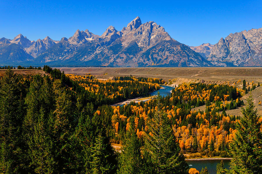 Peak autumn foliage along the Snake River viewed from the famous Snake River Overlook in Grand Teton National Park