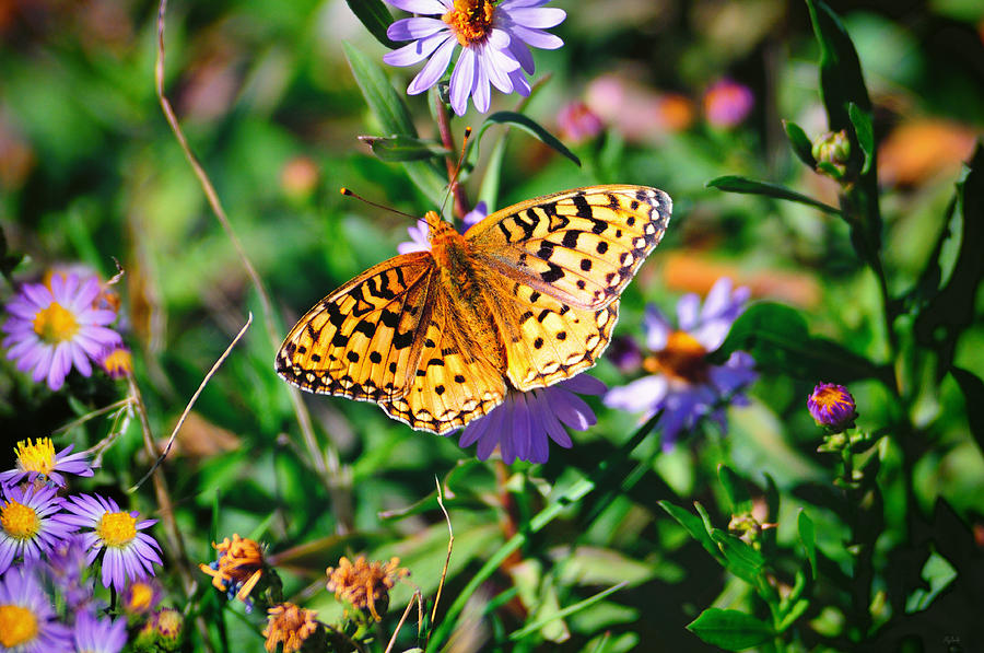 Teton Butterfly fine art nature prints