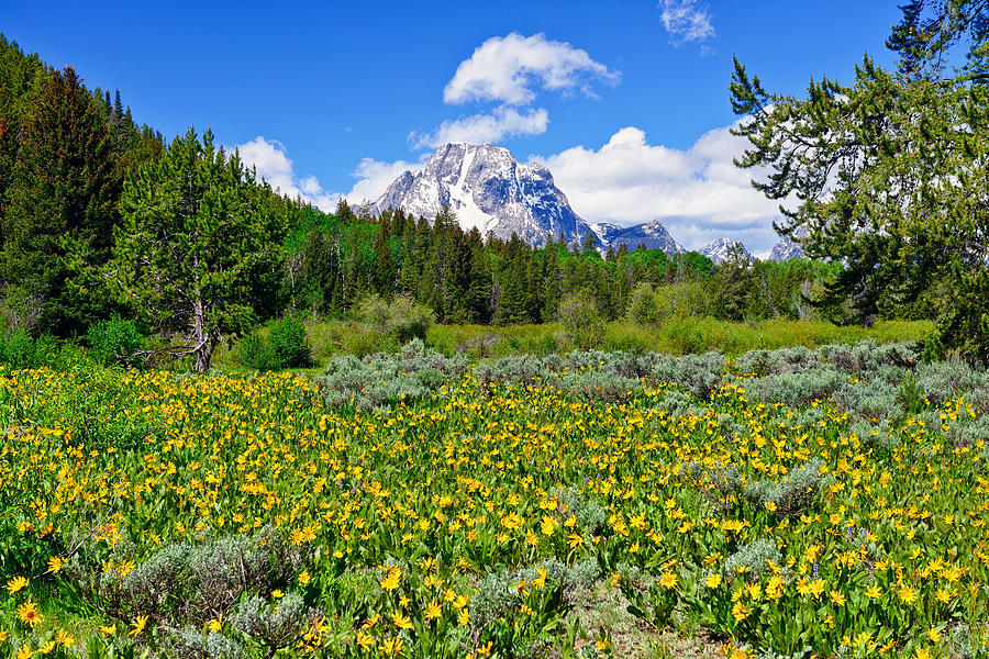 Teton Spring Wildflowers fine art prints