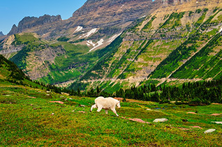 Logan Pass fine art nature prints