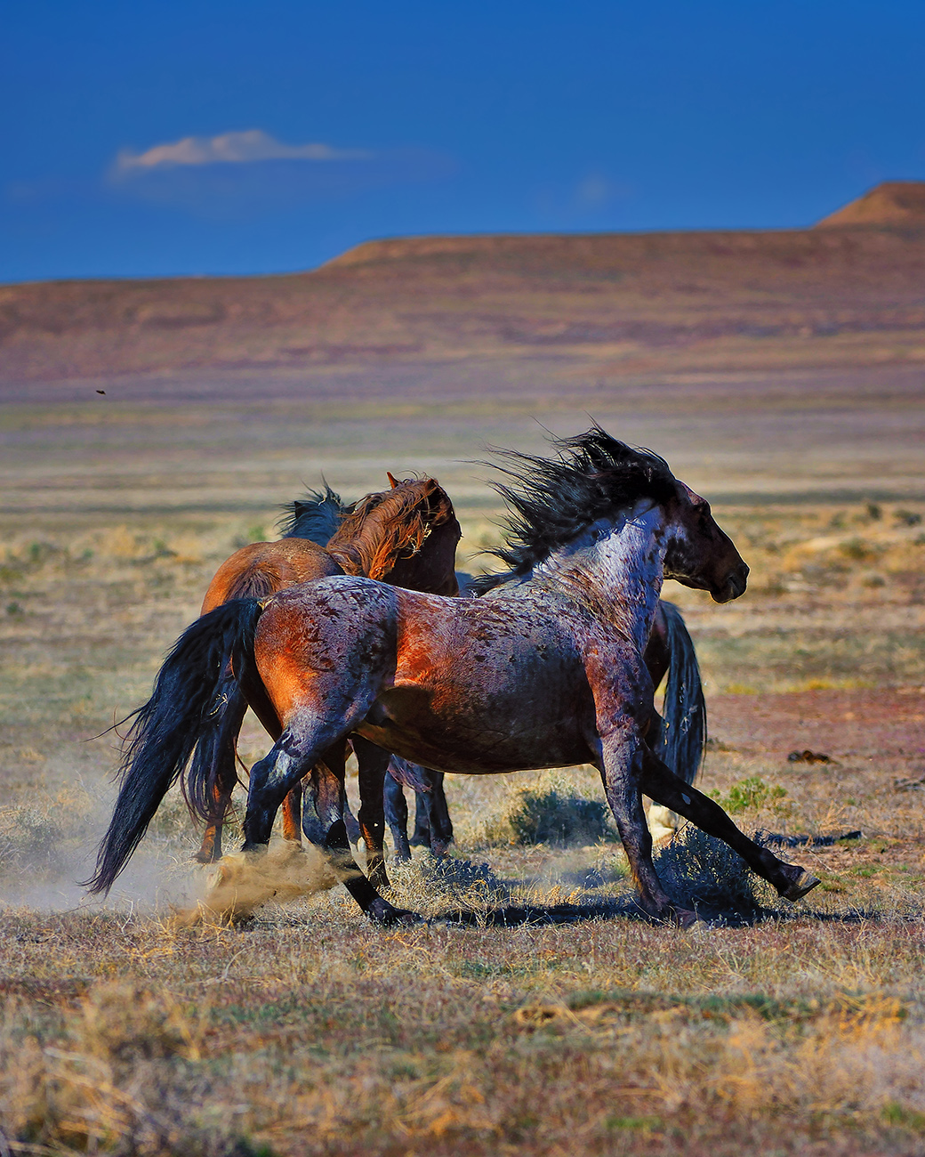 fine art nature photography from the american southwest