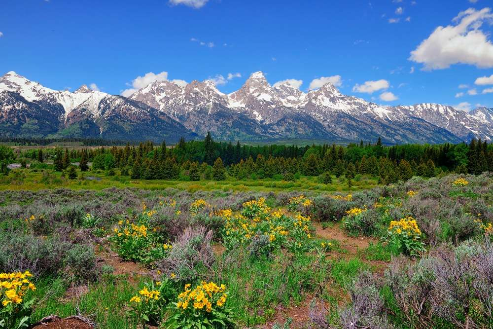 Grand Teton National Park Springtime Limited Edition