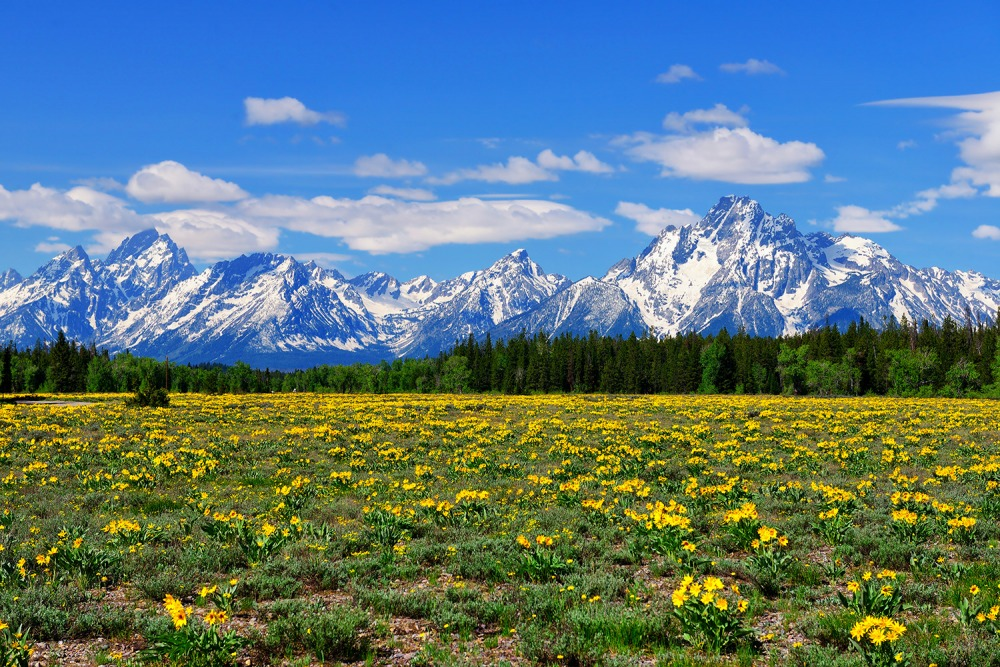 Teton Spring Meadow Limited Edition