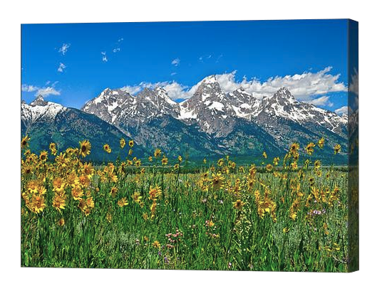 Tetons Peaks and Flowers Canvas Print