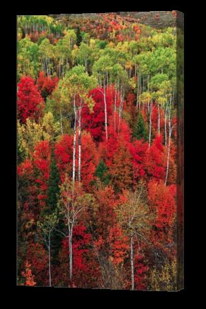 Idaho Autumn Canvas Print