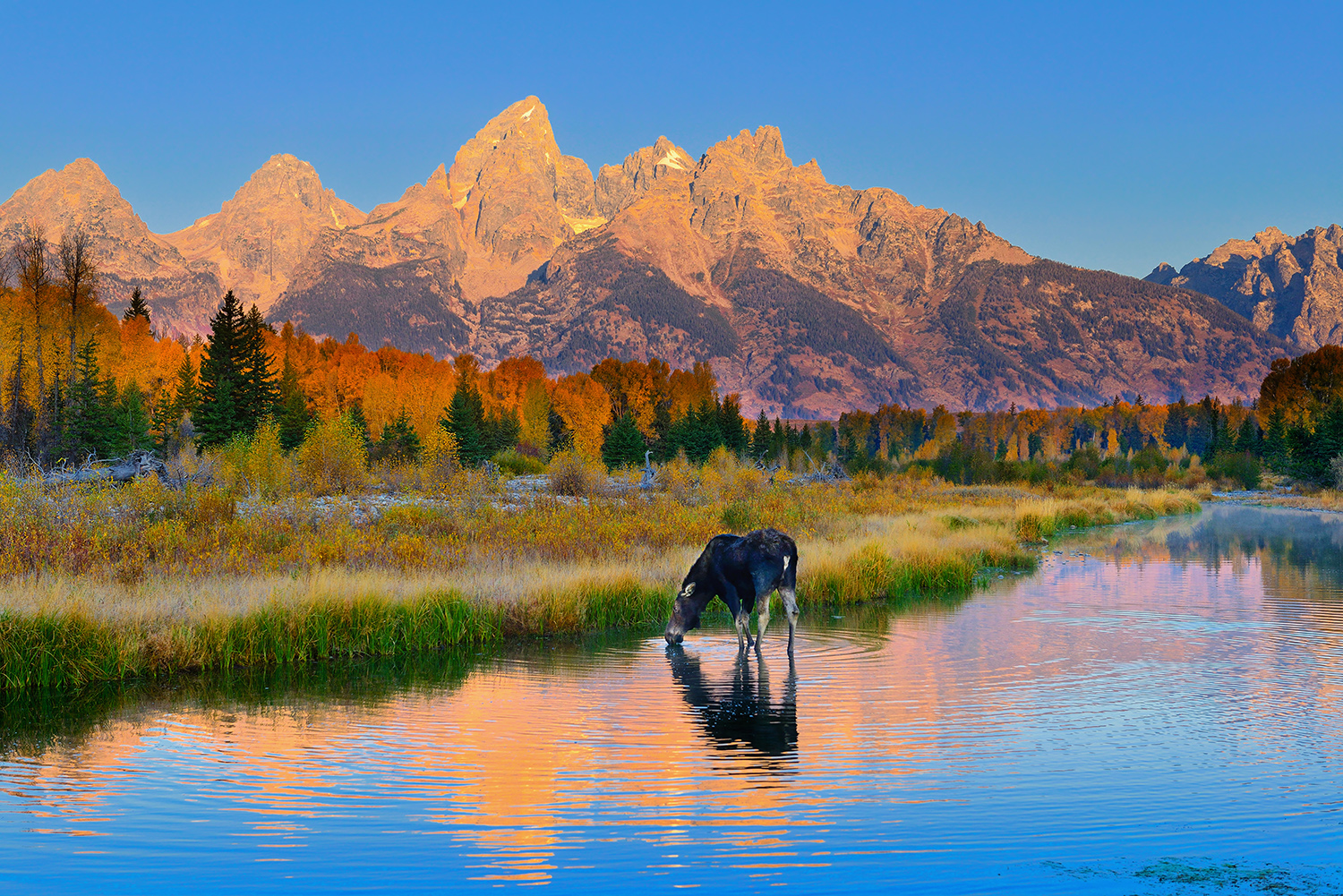 Schwabacher Morning Light