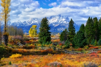 Teton Autumn