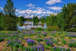 Pilgrim Creek Wildflowers