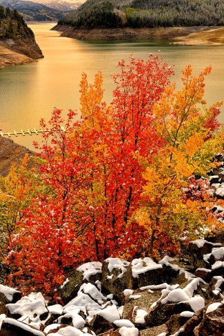 Maples Along the Palisades