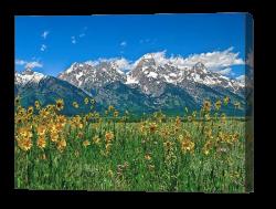 Tetons Peaks and Flowers Canvas Print