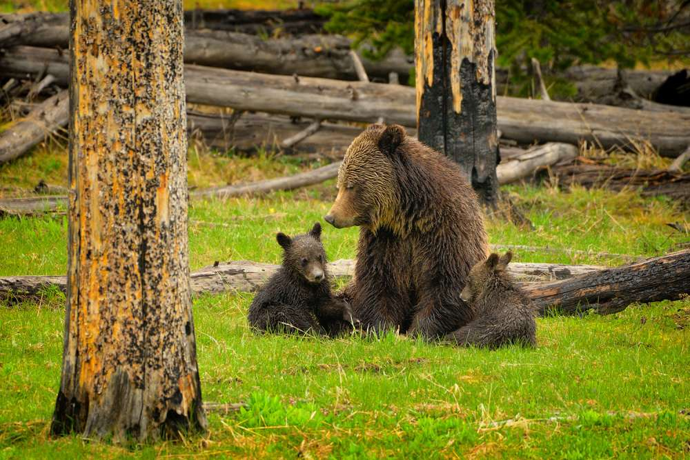 Grizzly Family Gathering