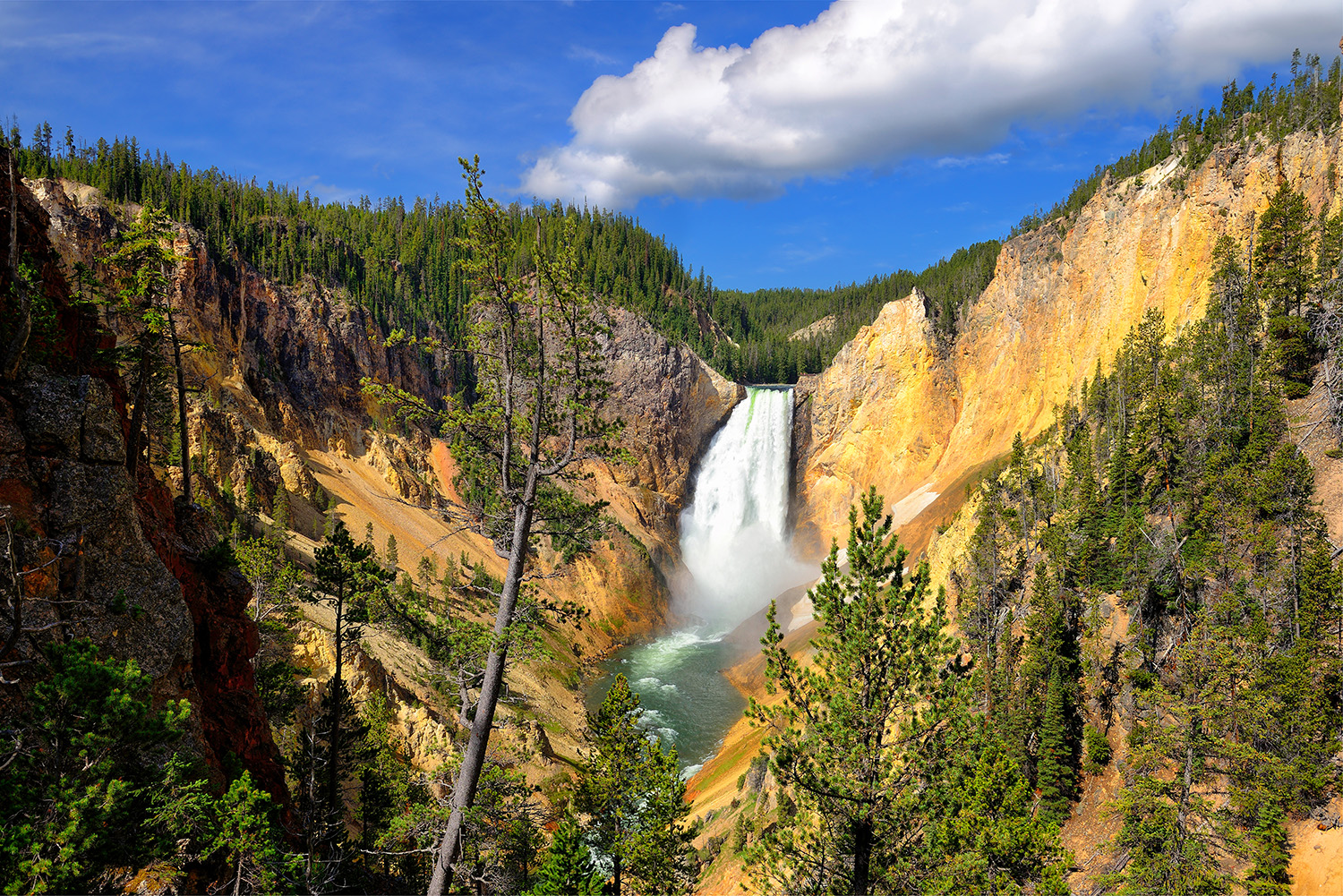 Yellowstone National Park Nature