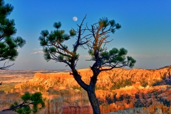 Moon Over Bryce