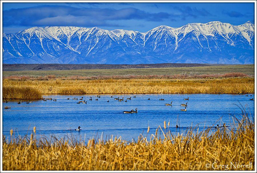 Camus-National-Wildlife-Refuge.jpg